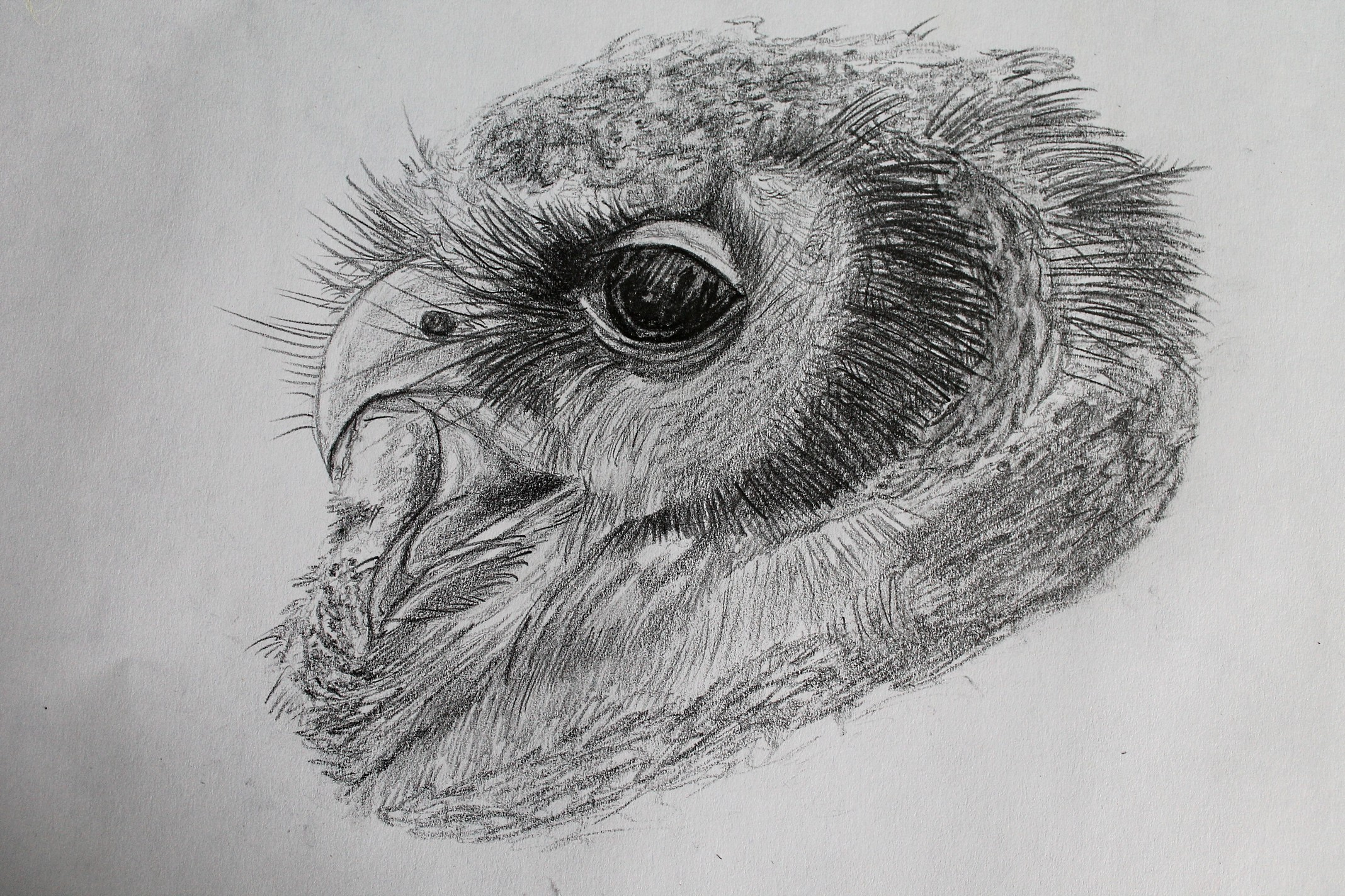 I used a 4B grade pencil for this owl drawing, my comfort pencil!