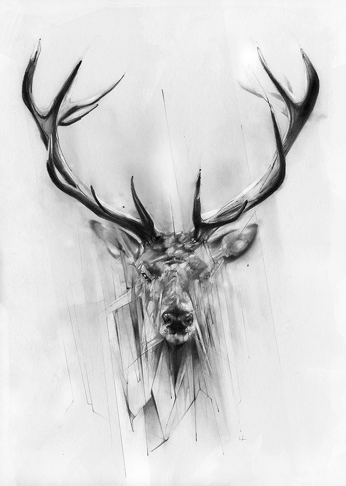 Red Deer  © Alexis Marcou  alexismarcou.com