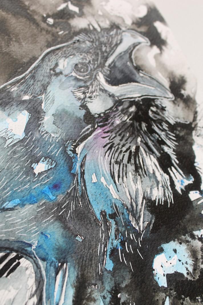 Raven8.JPG