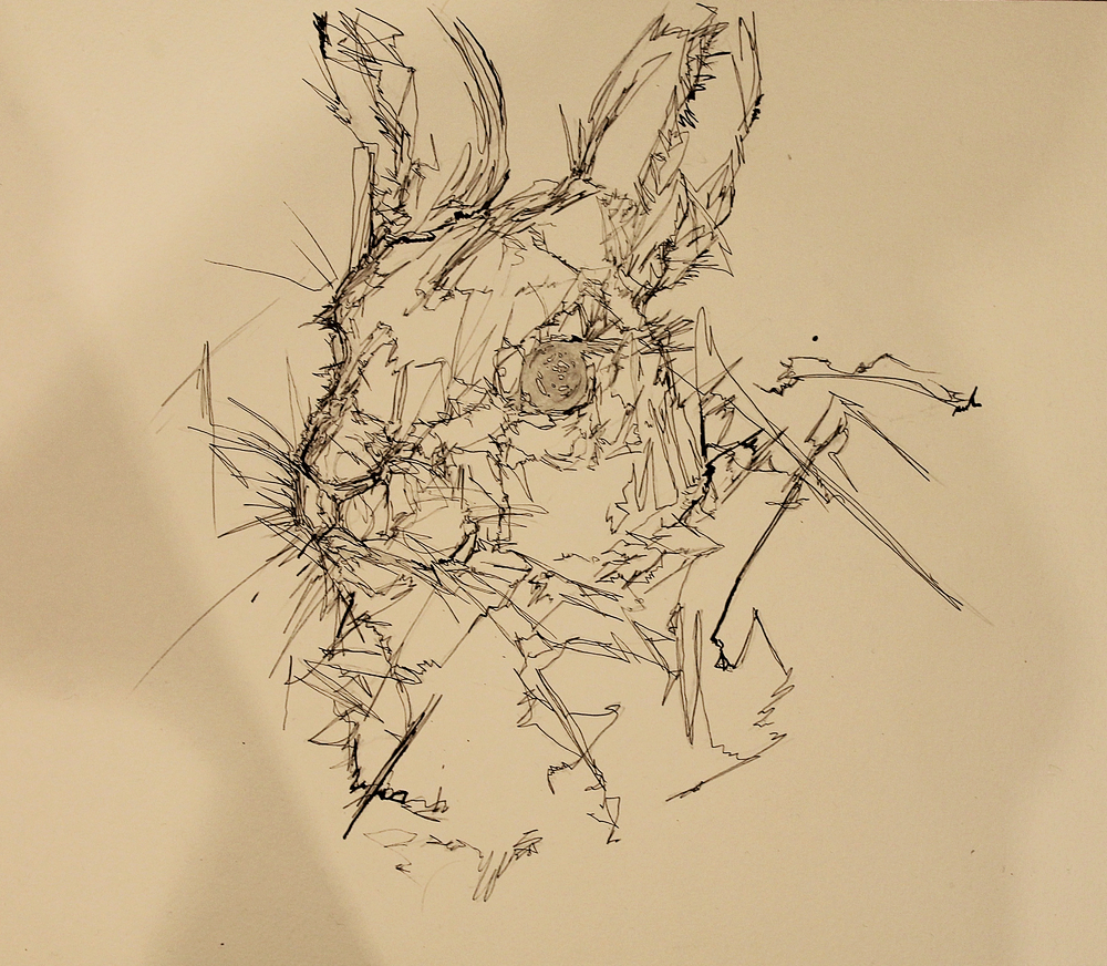 rabbit-ink-2.jpg