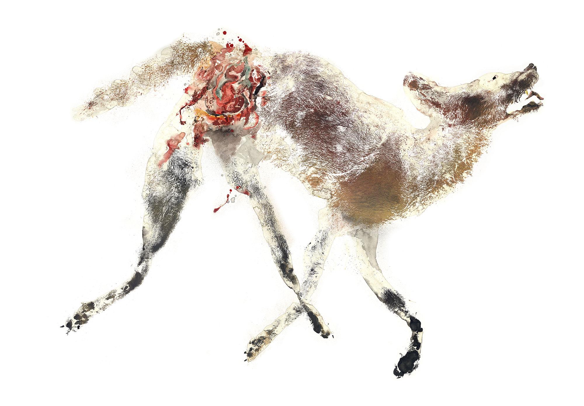 Coyote 1  © Inked Animal  inkedanimal.com