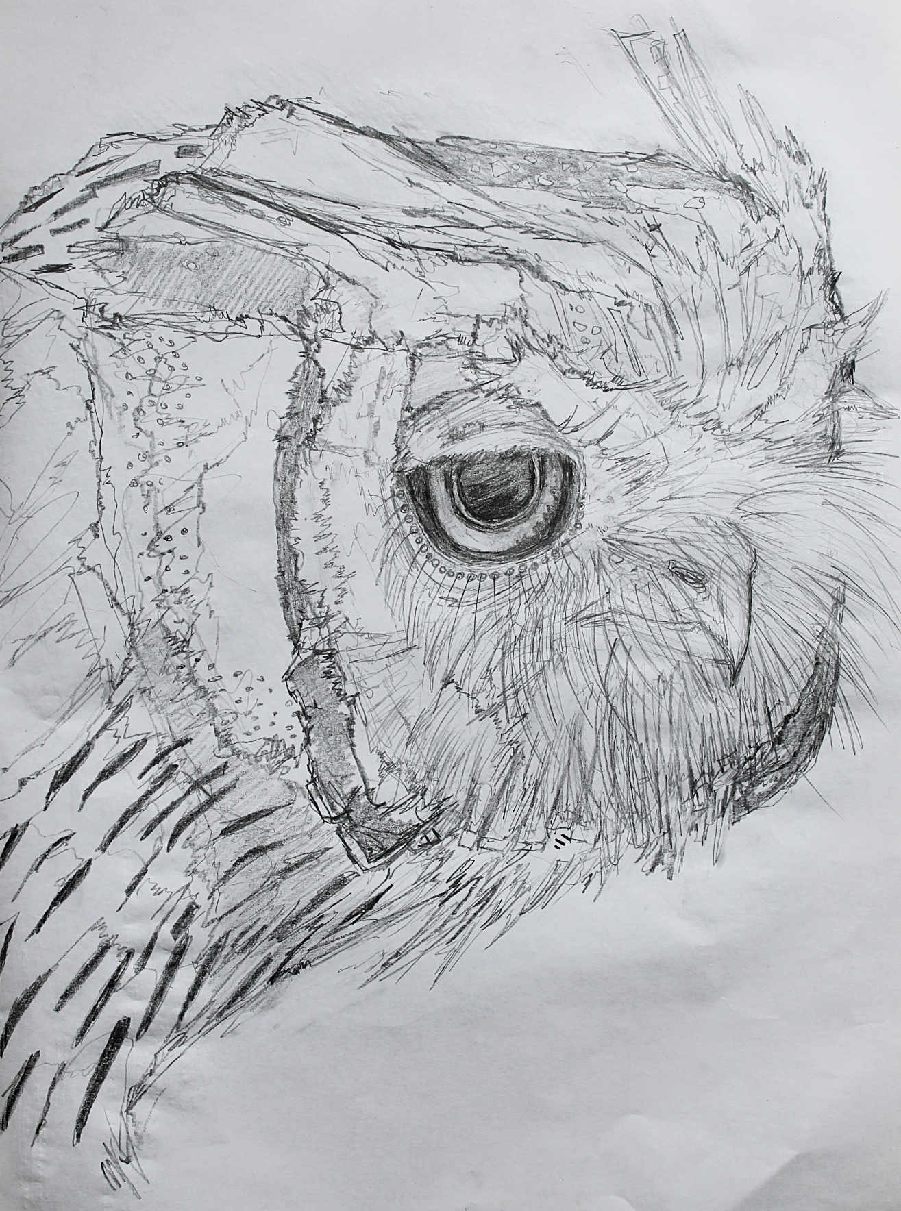 owl-sketch-may.jpg