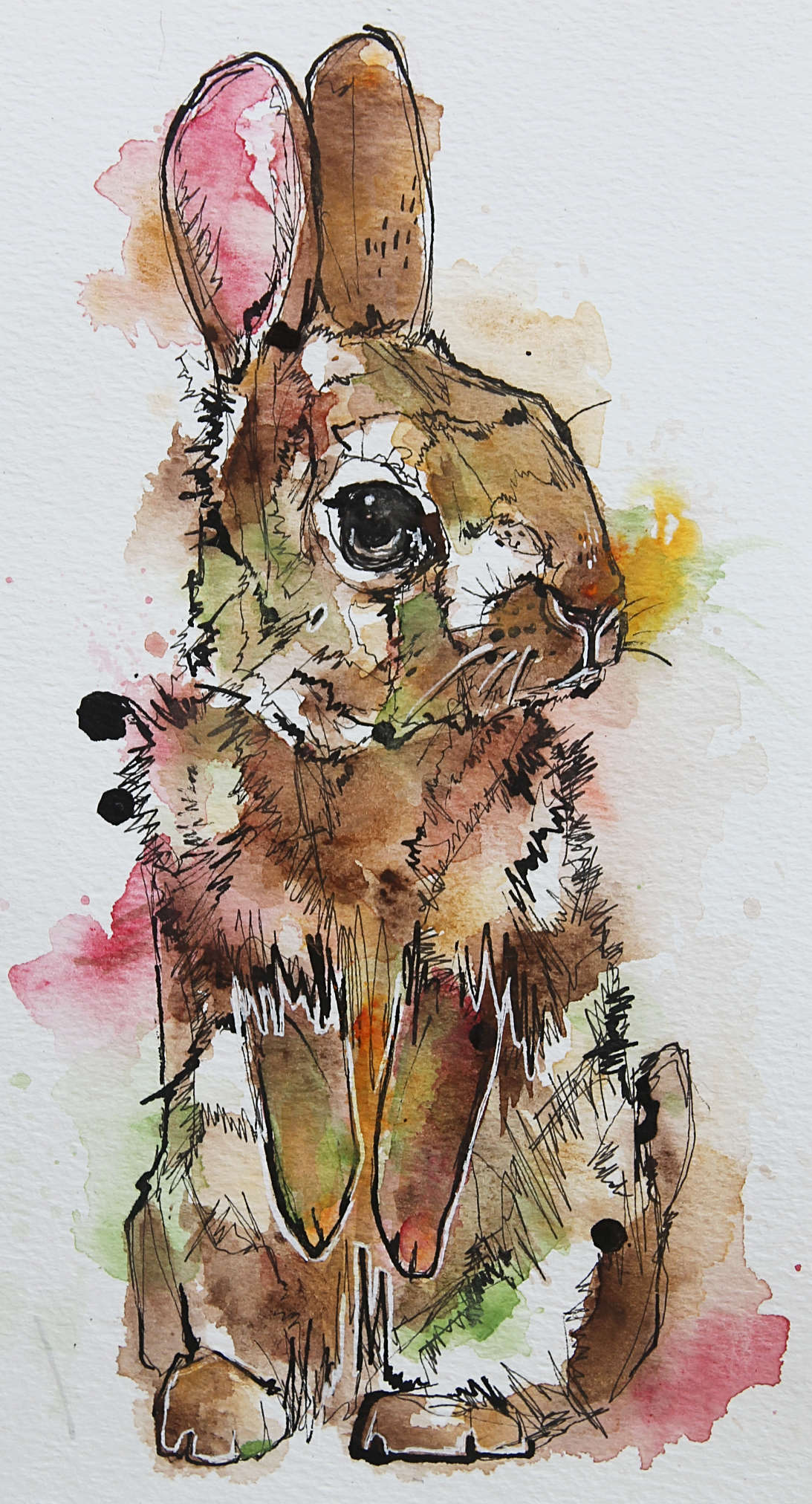 rabbit-tiny-dec-18.jpg