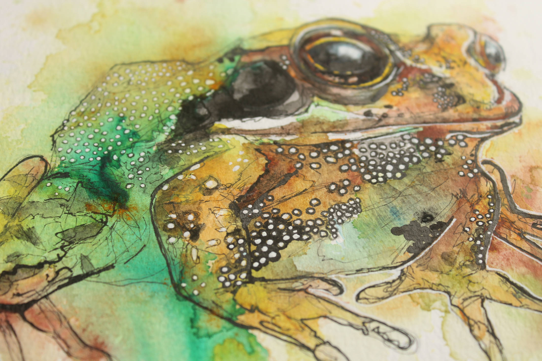 toad-pose-2.jpg