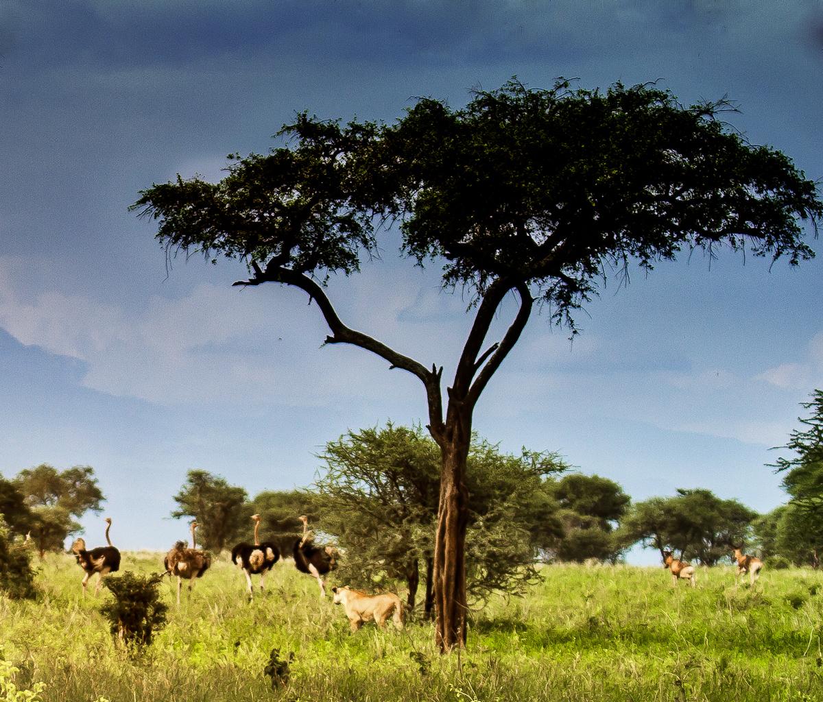 africa-1170-Edit-Edit-Edit.jpg
