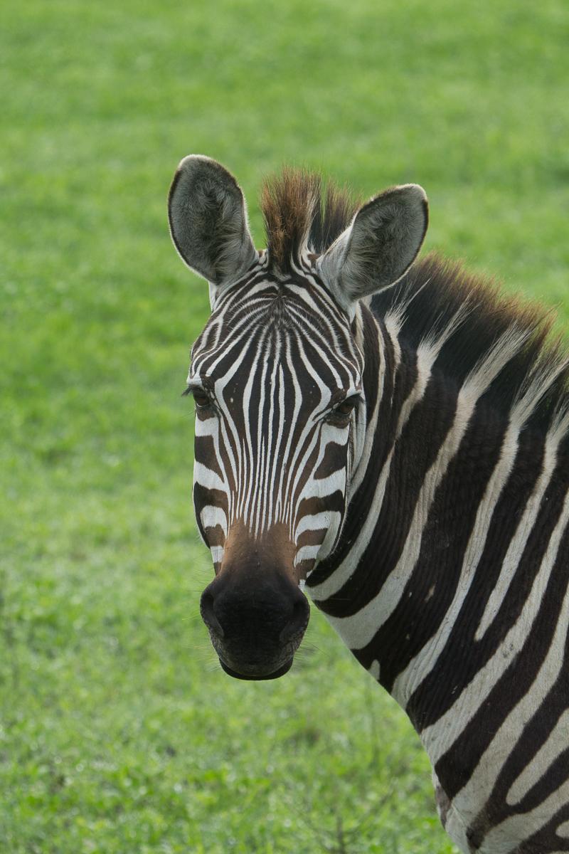Africa-4841.jpg
