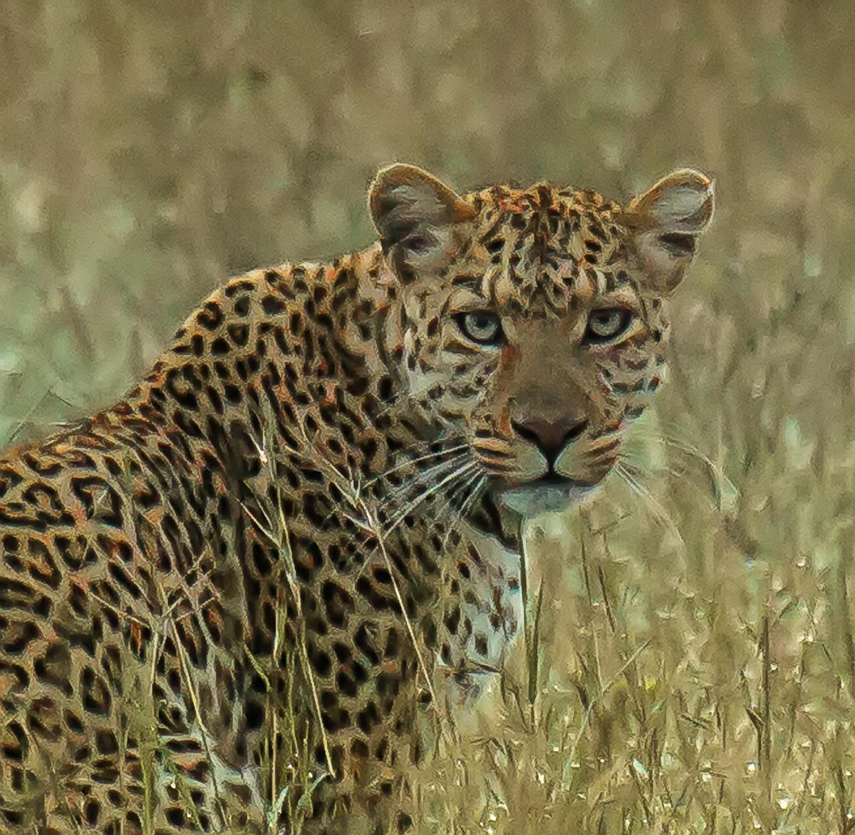 Africa-6178-Edit-Edit.jpg