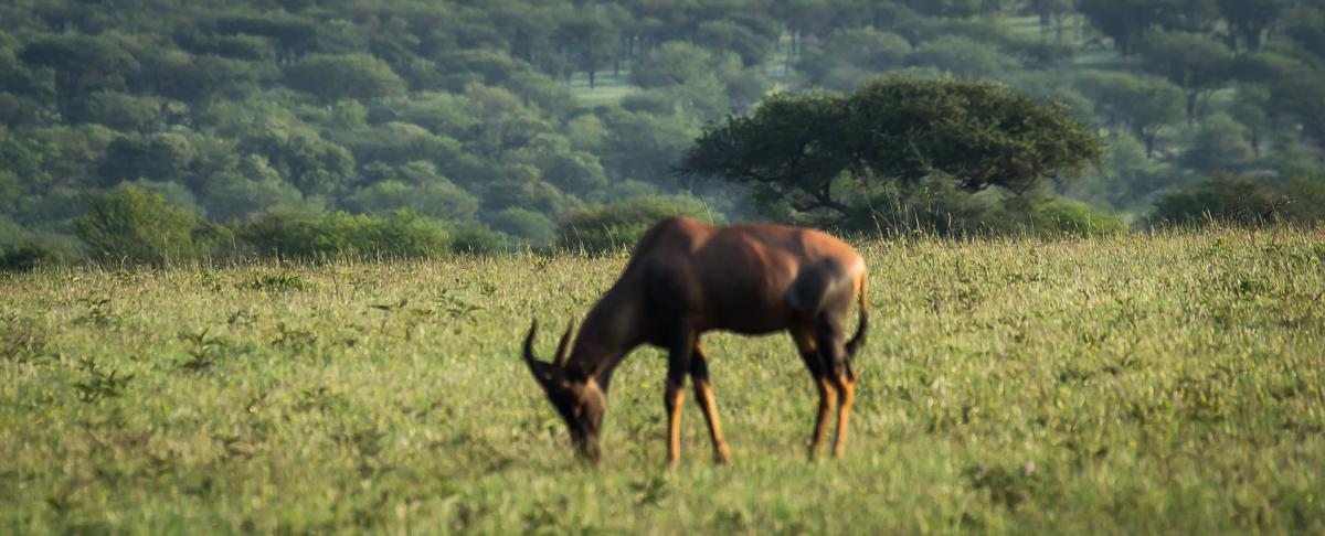 Africa-6273.jpg