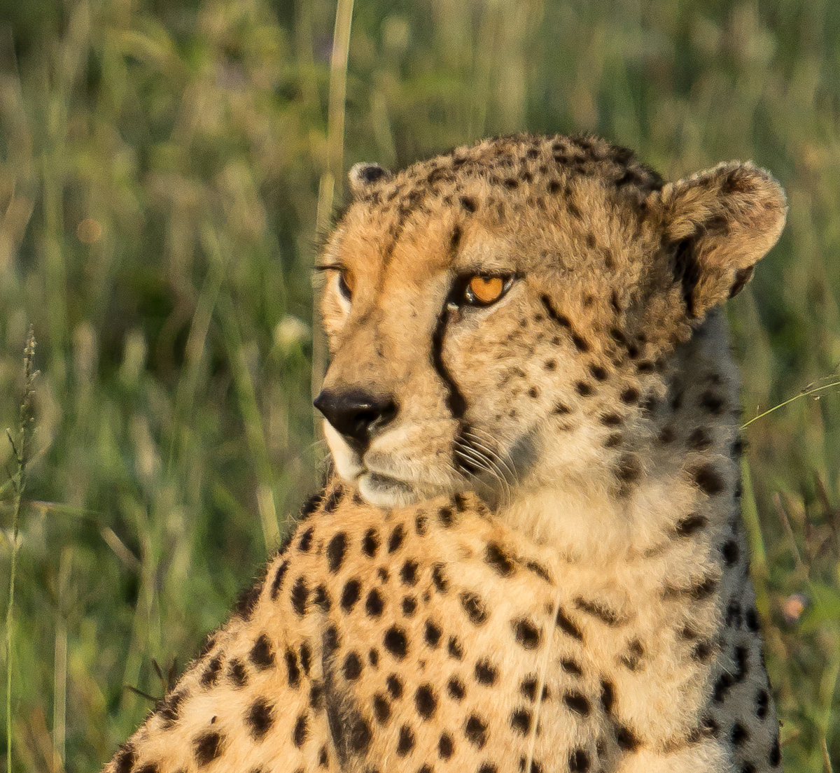 Africa-6259-Edit.jpg