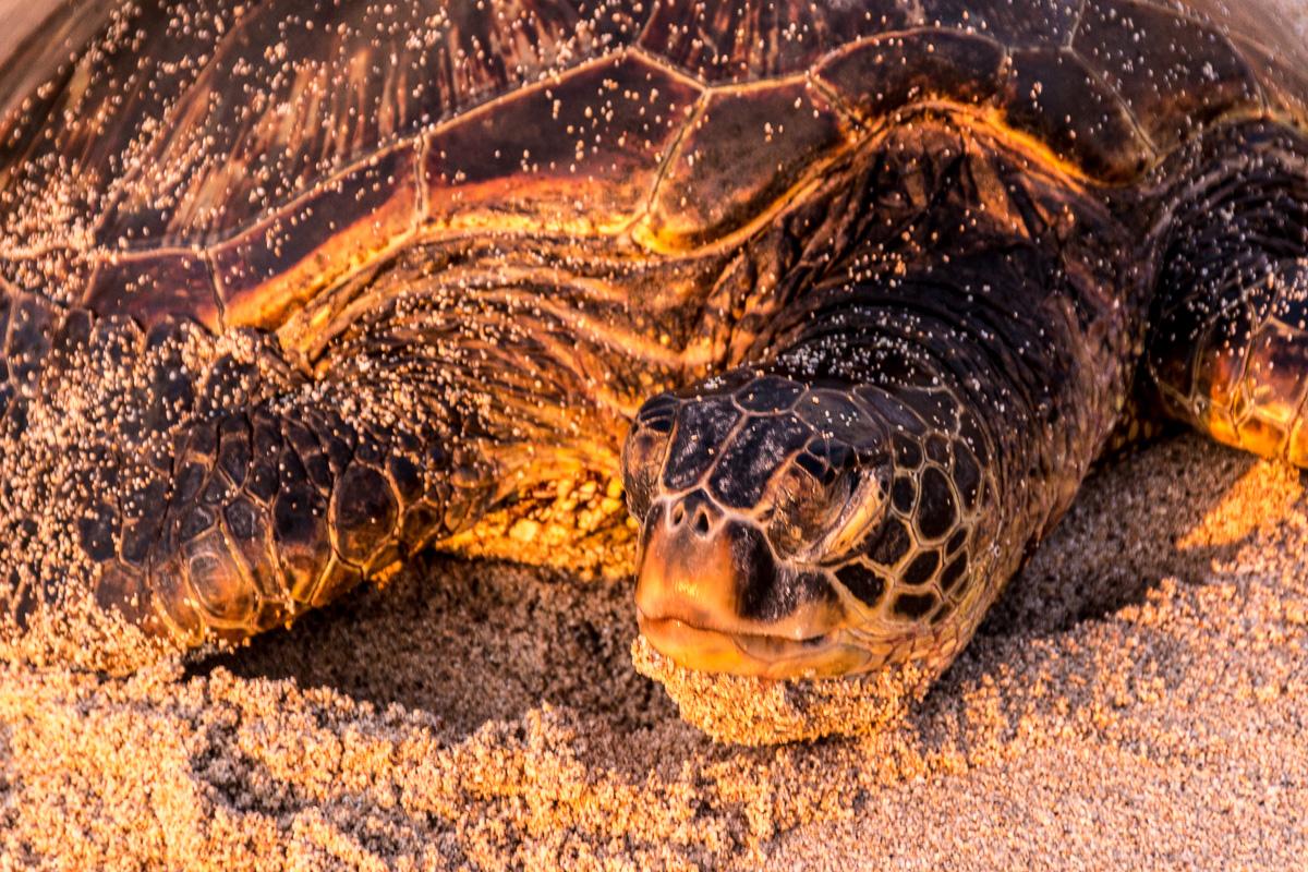 Hawaii-140.jpg
