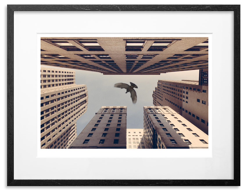 """Stay Fly   Archival Pigment Print on 300gsm Museum Grade 100% Cotton Rag   24"""" x 18"""" - Edition 21 -   Purchase    66"""" x 44"""" - Edition 10 -   Purchase"""