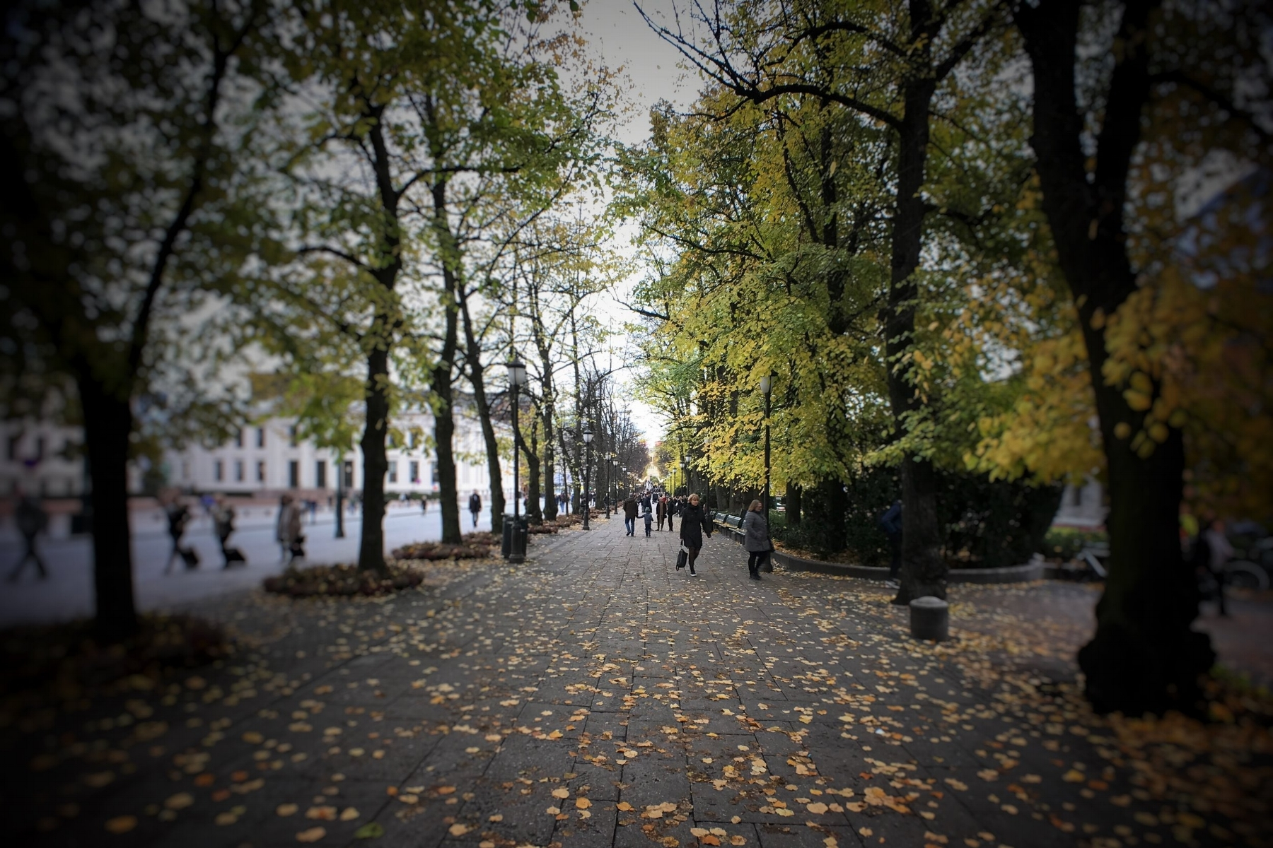 Karl Johans Gate, near Universitetsplassen at the University of Oslo.