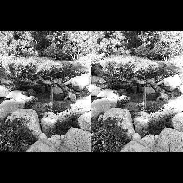 #crosseye #3d #stereogram #y_y #armstereogfx