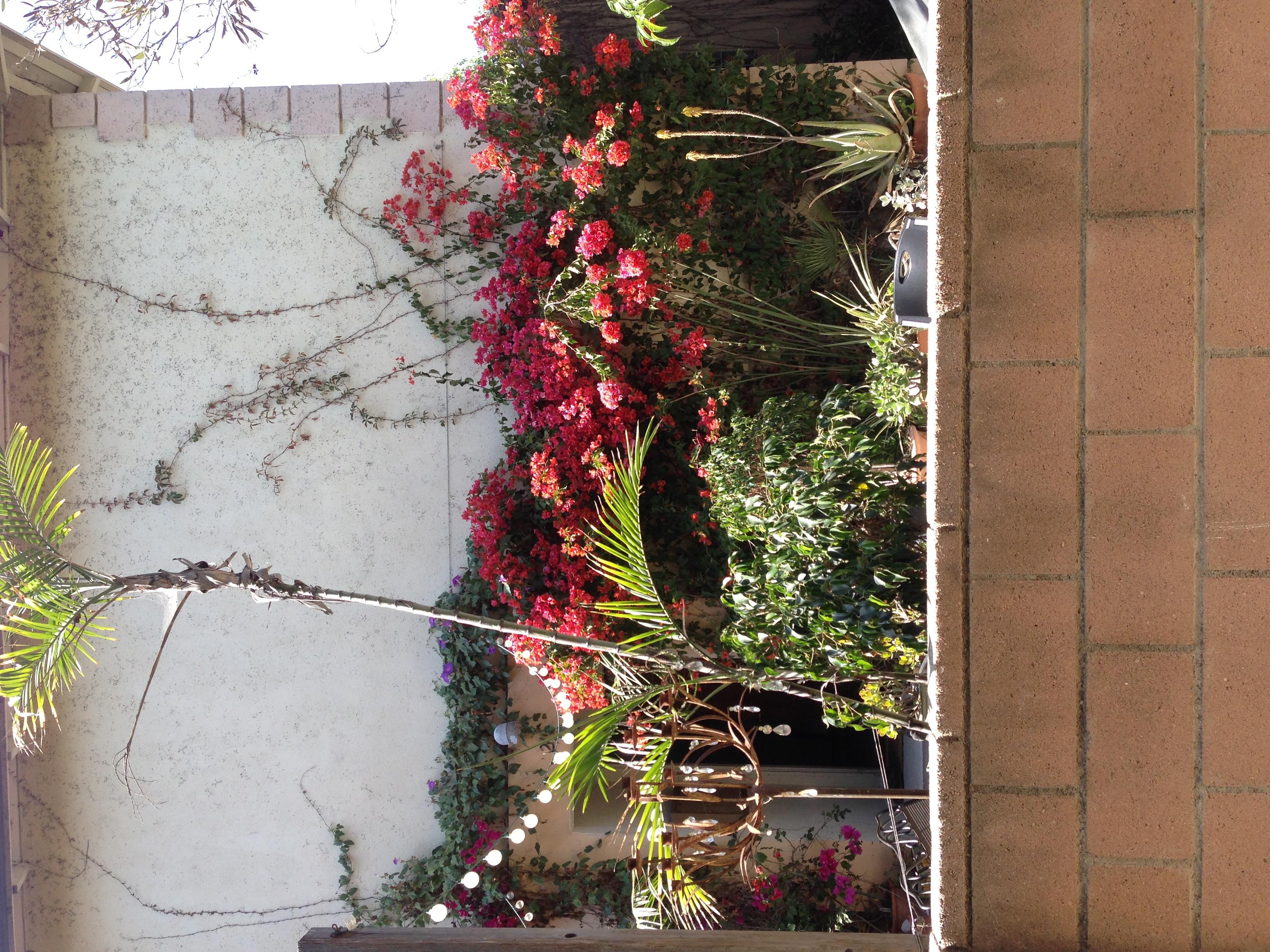 IMG_7521_FloralYards.JPG