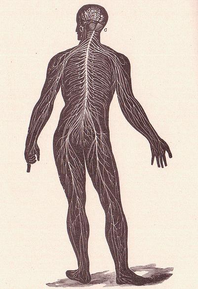 Brain Cell Bodywork