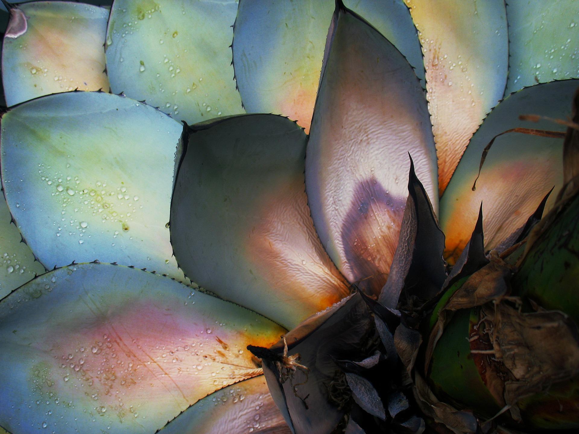cactus-184169_1920.jpg