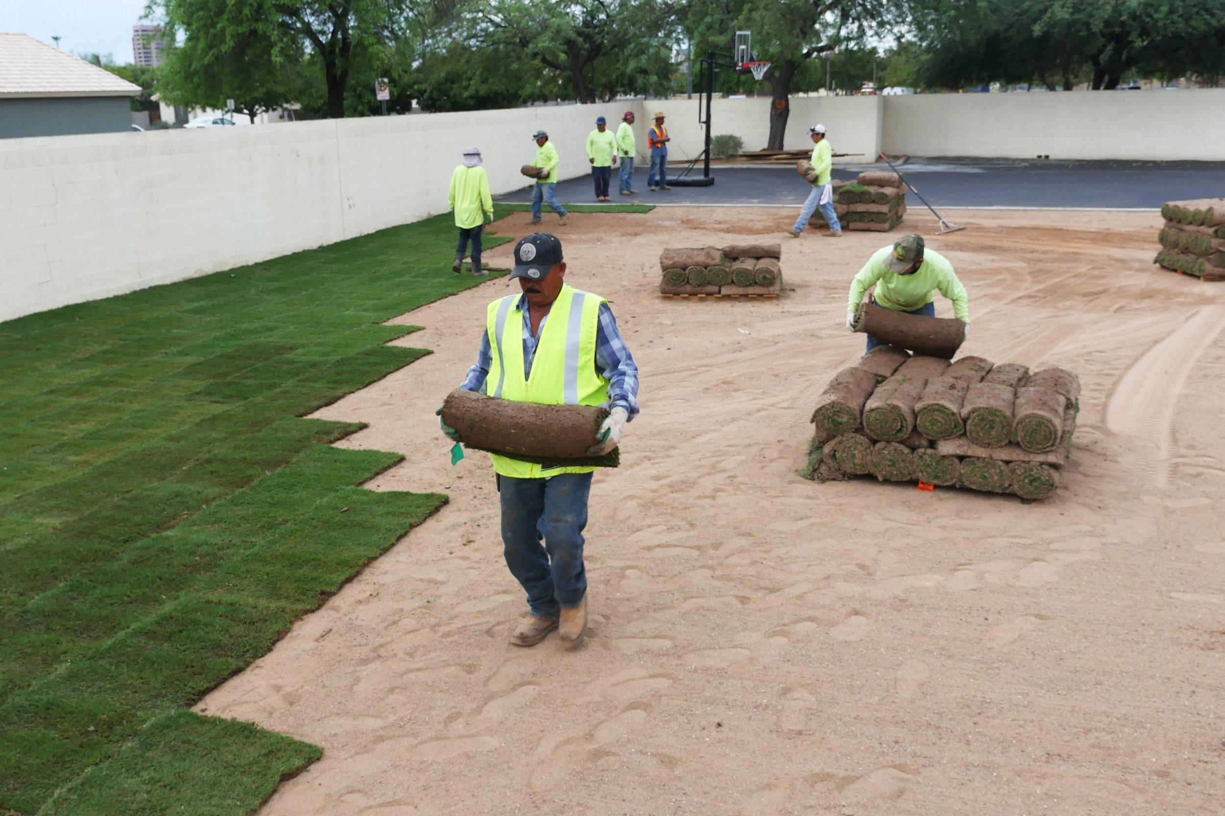 Landscaping 2 - AZACS Upper School Campus Renovation 2016.jpg