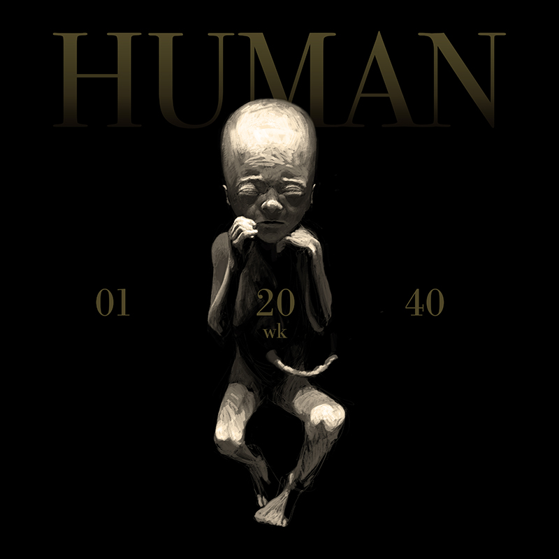 HUMAN_20wks_Square.jpg