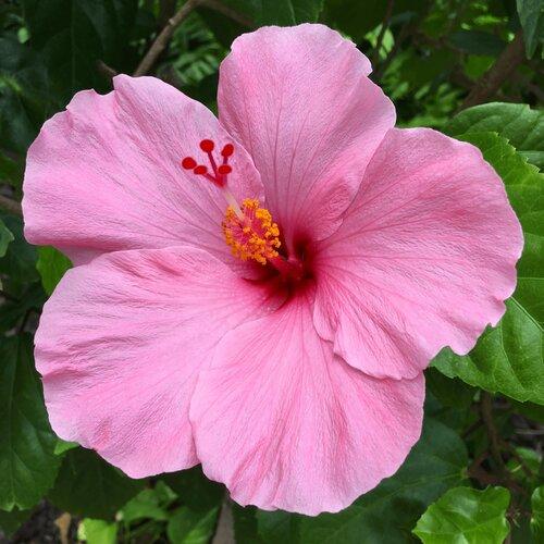 thursday 13: naturally pink
