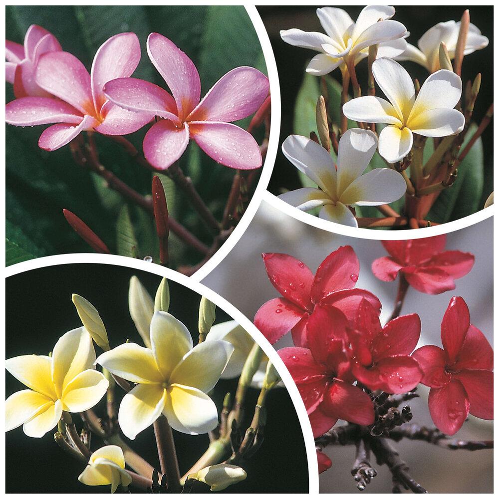 Hawaiian Plants Your Questions Answered Best Hawaiian Plants From Kanoa Hawaii
