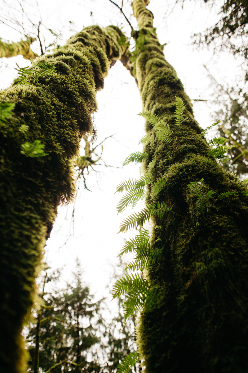 Moss_on_Mount_Si_Trees