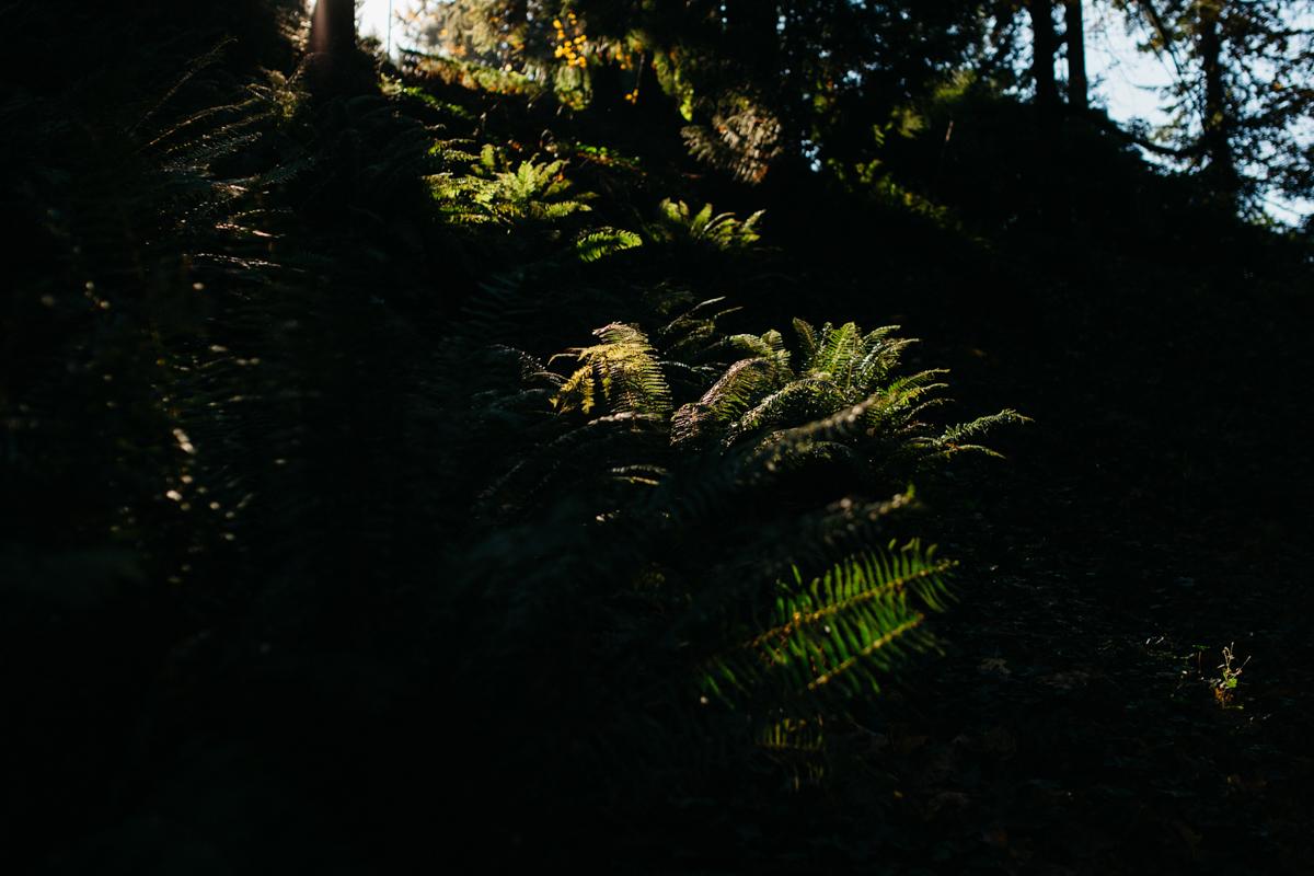 Washington_Park_Portland_Oregon