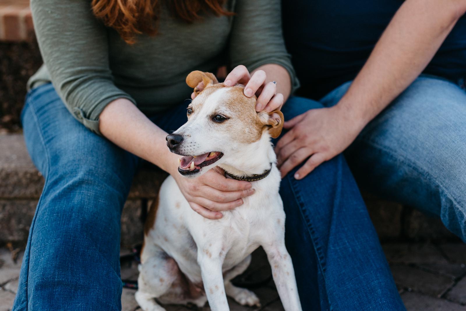 Dog_Engagement_Session