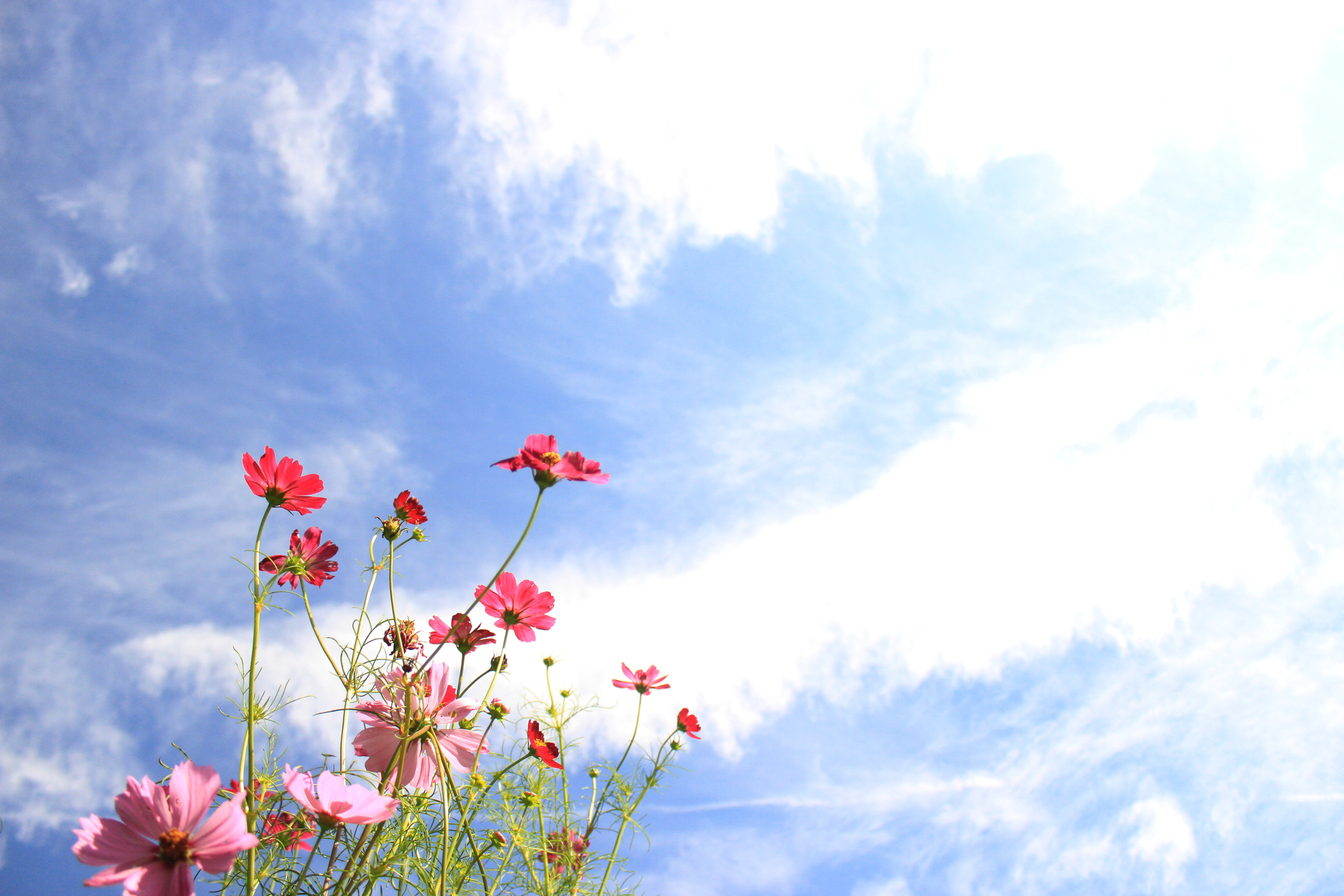 Beautiful_flowers_and_Blue_Skies