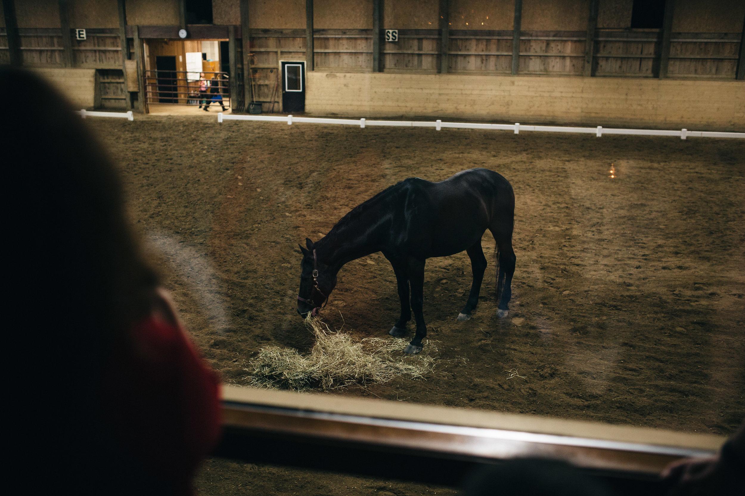 Horses at wedding reception in Aurora, Ohio.