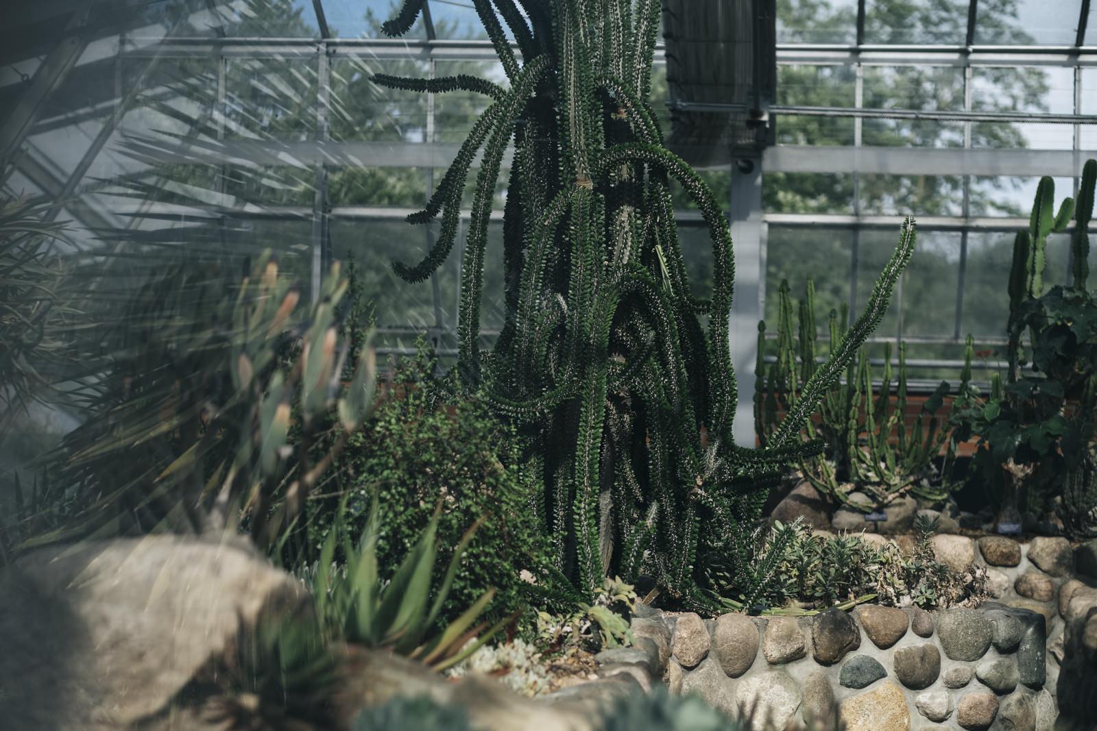 Cactus at Matthaei Botanical Gardens.
