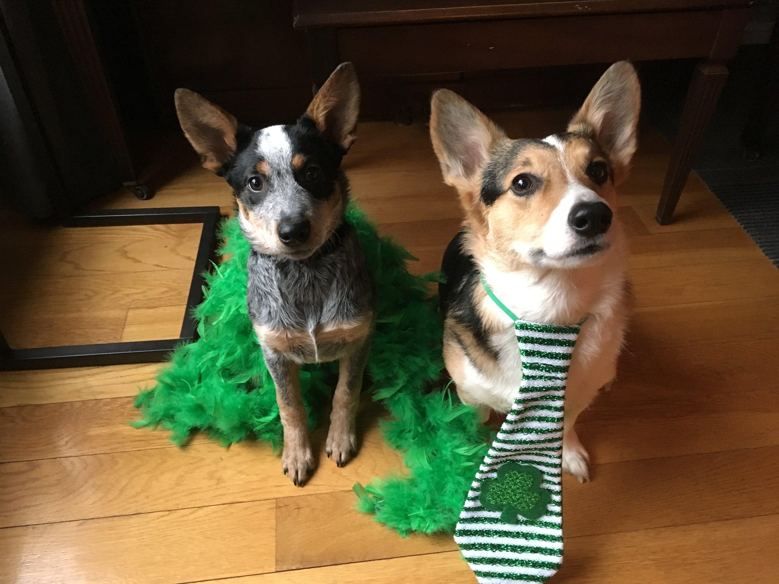 Dogs_Celebrate_St.Pattys_Day