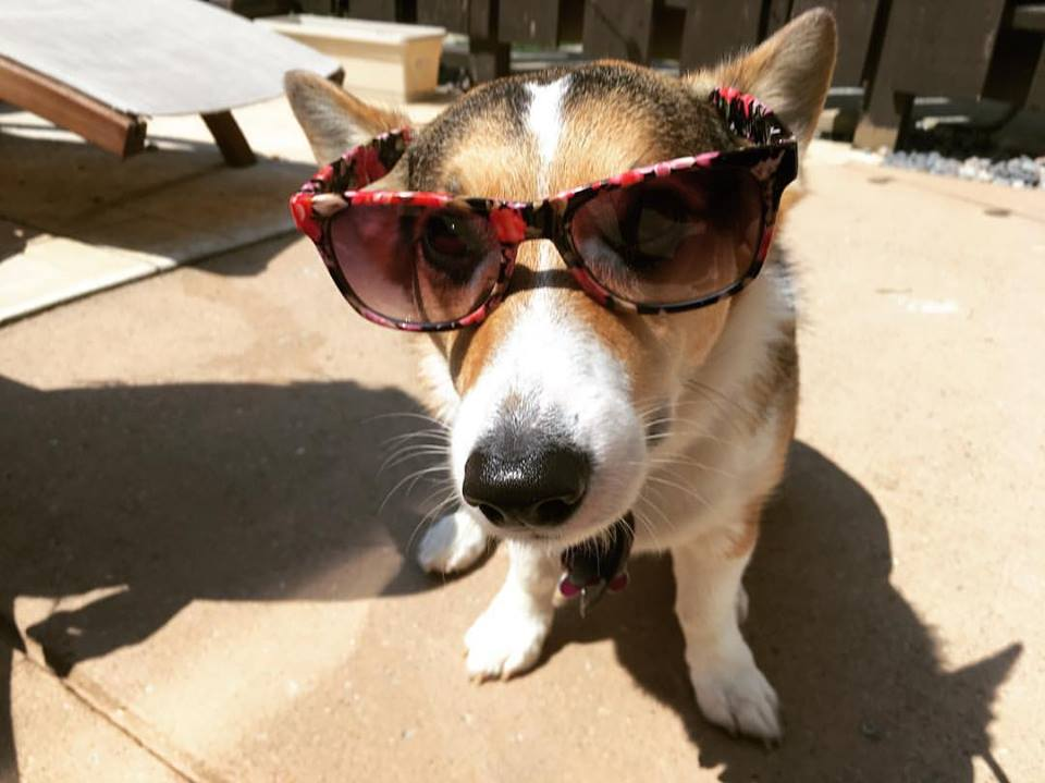 Dogs_of_Summer