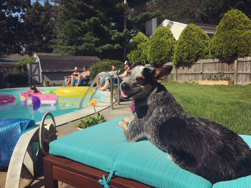 Puppy_Pool_Day