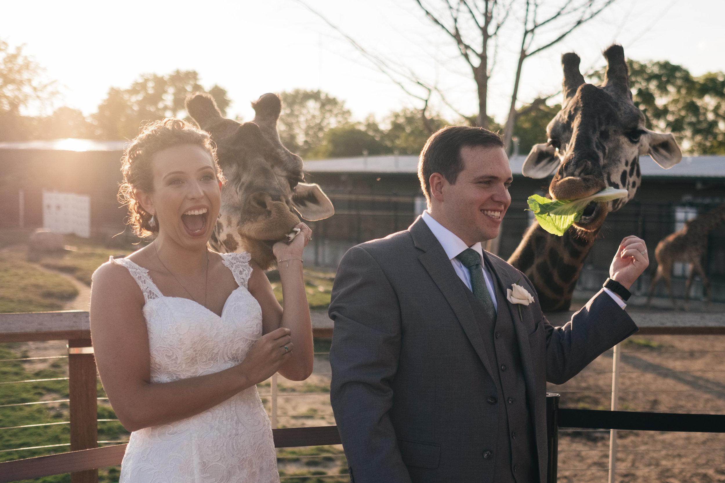 Best_Wedding_Photography_at_Toledo_Zoo