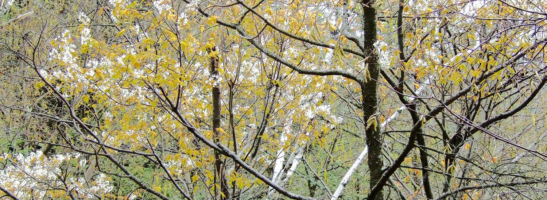 Mohonk - Dogwood: Spring
