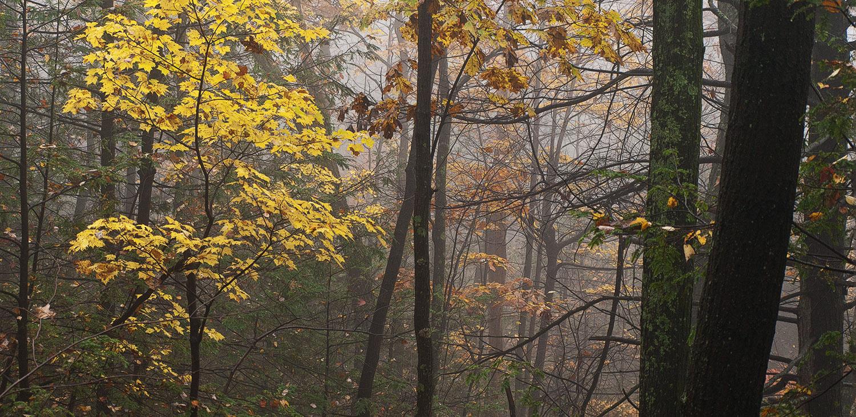 Mohonk - Yellow Mist