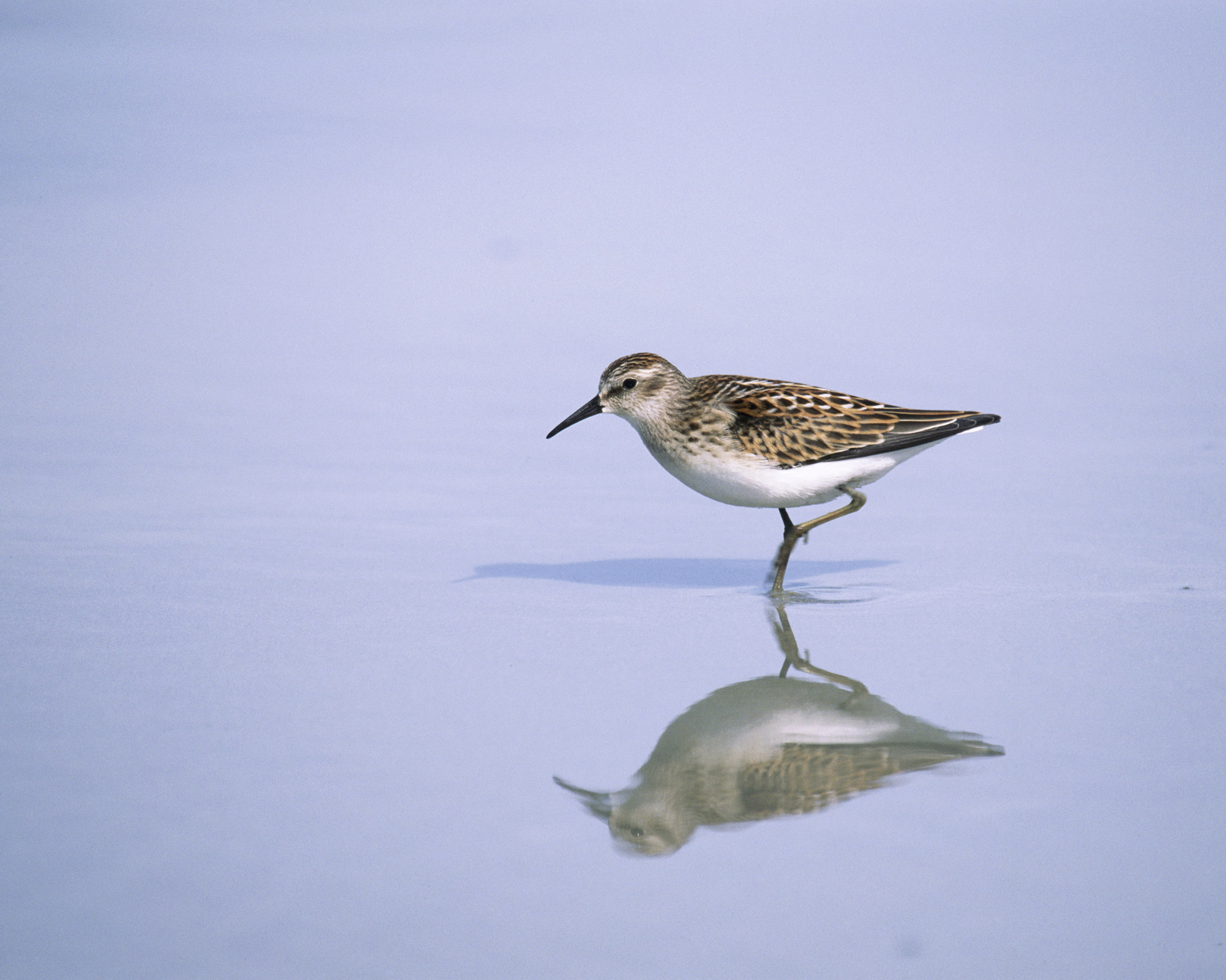 shorebird.jpg