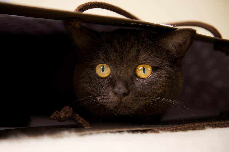 Katzenfotografin Sandra Oberer