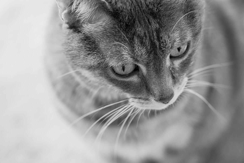 214_Katzenfotografin_Sandra_Oberer.jpg