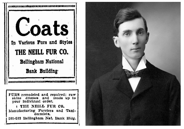 Neill Fur Ads from the Bellingham Herald, circa 1920. Photo of Walter Neill courtesy Gary Gordon.