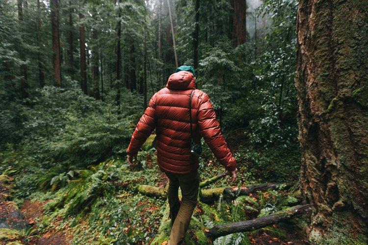 matt_redwoods-4110.jpg