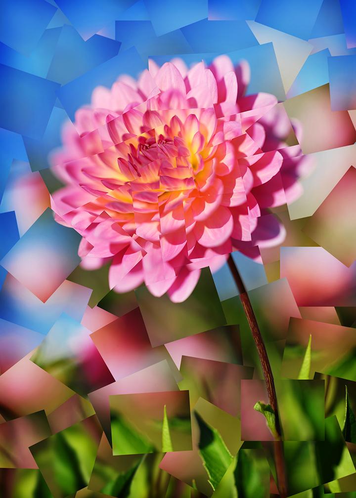 Scoverski - 284991725_pinkdahlia.jpg