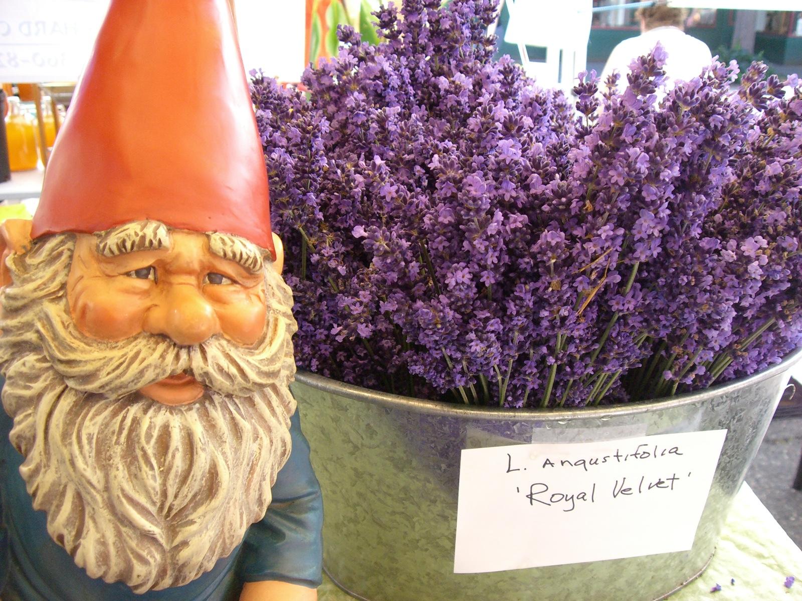 Farmers Market Lavender (LAV)