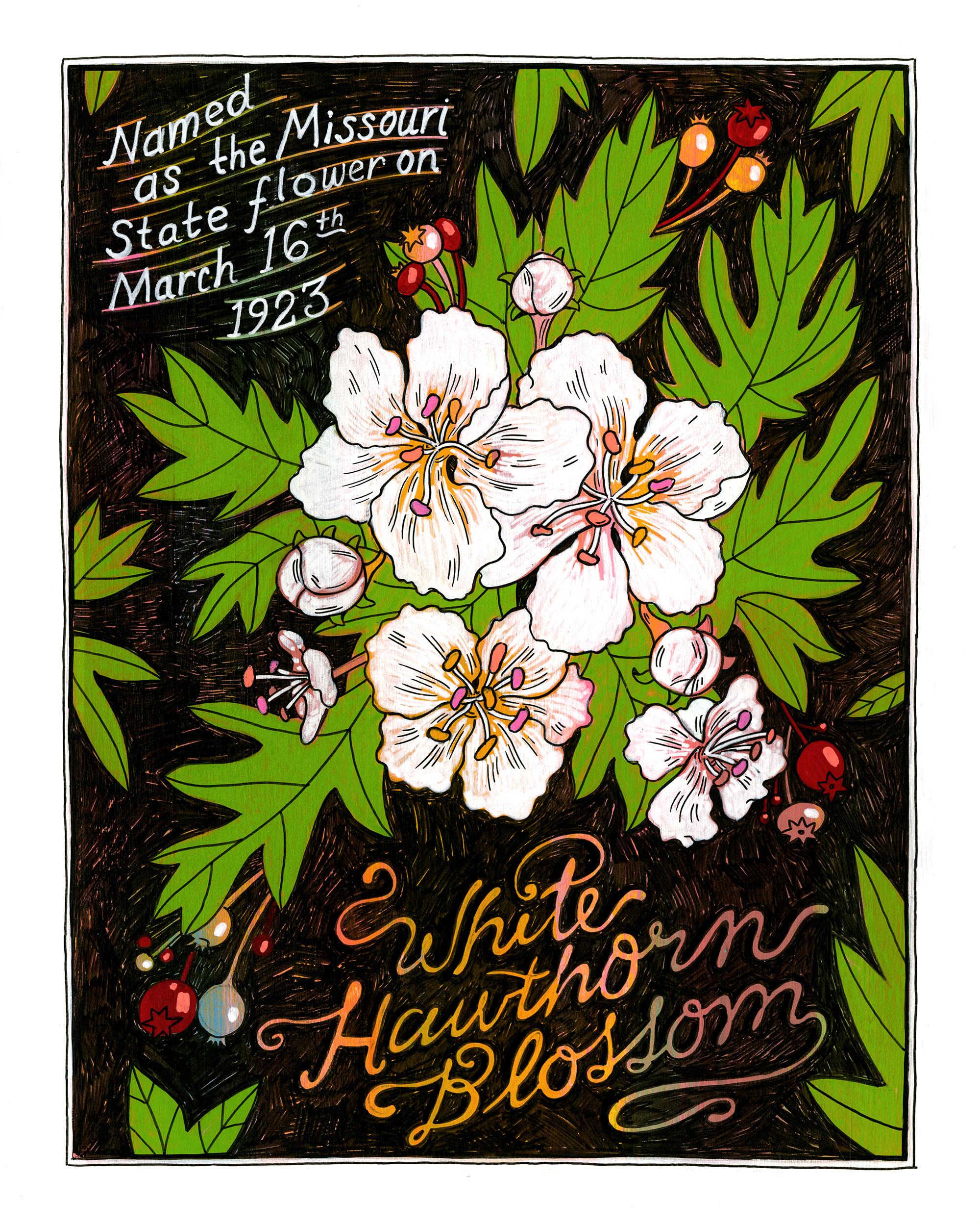 MissouriSymbols_flower.jpg