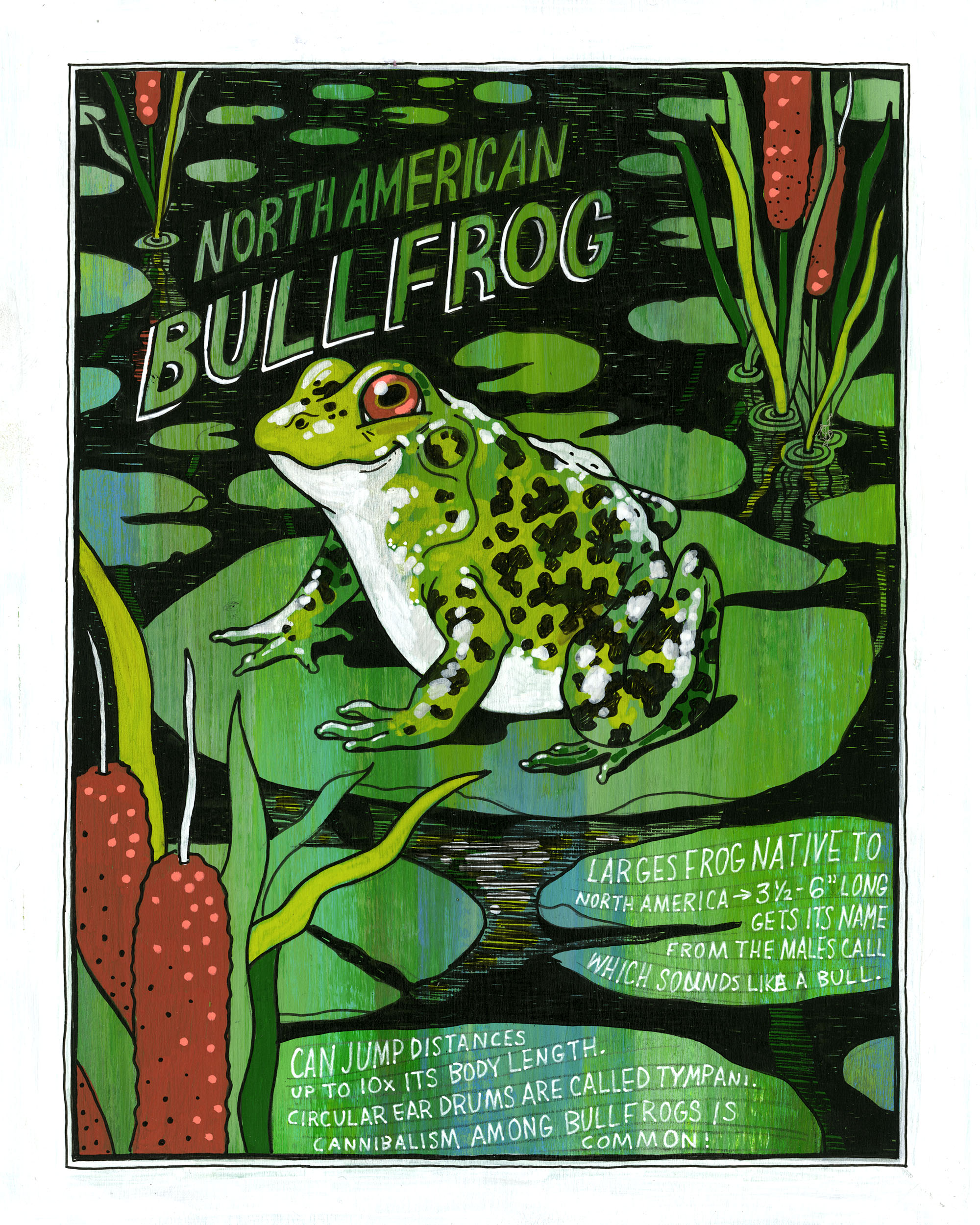 MissouriSymbols_frog.jpg