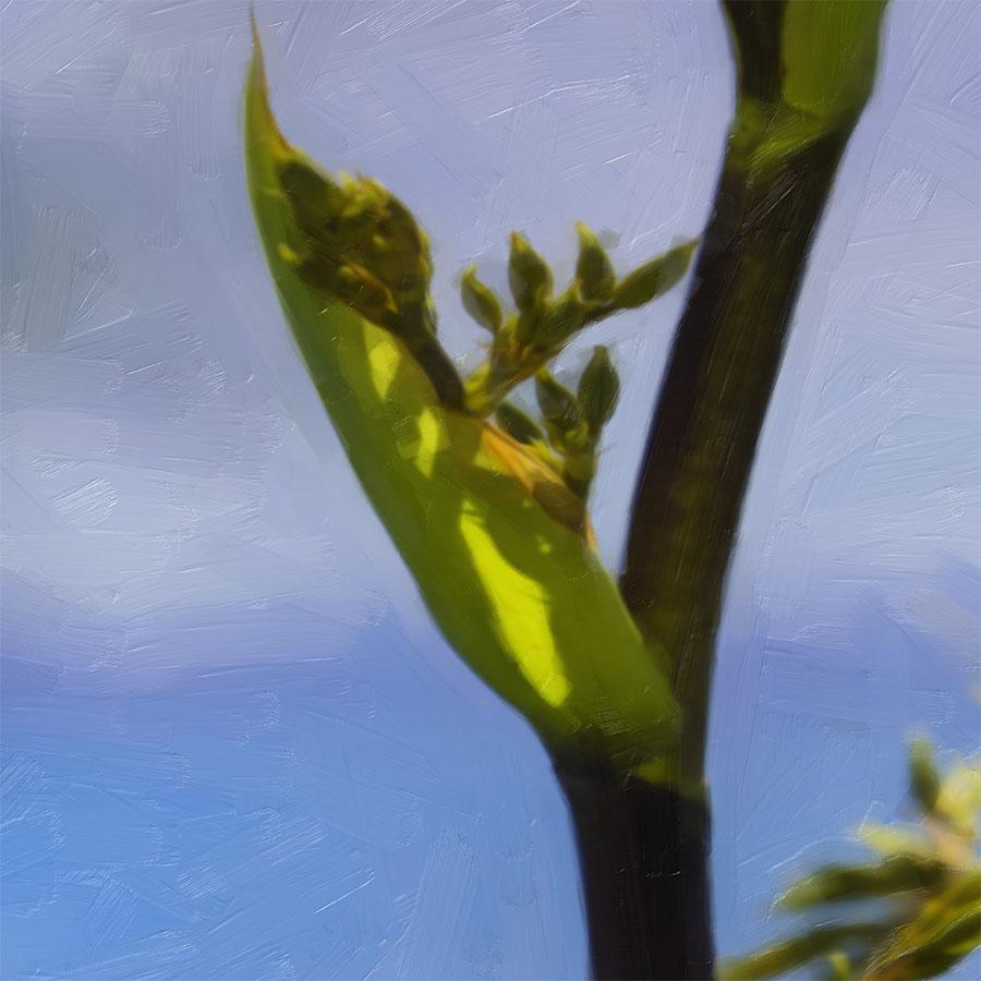 flax buds printed image splashback lucy g detail 3.jpg