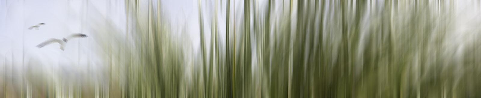 'BEACH GRASSES' printed image on glass splashback