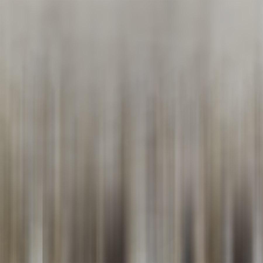 'SHELLS B' printed image on glass splashback - detail