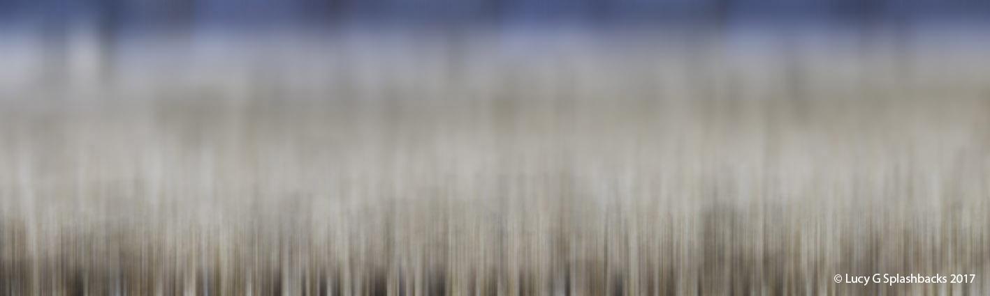 'SHELLS B' printed image on glass splashback