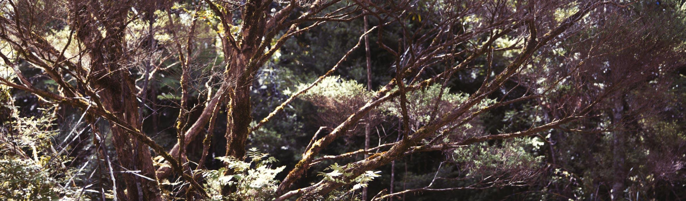 Hike-75.jpg